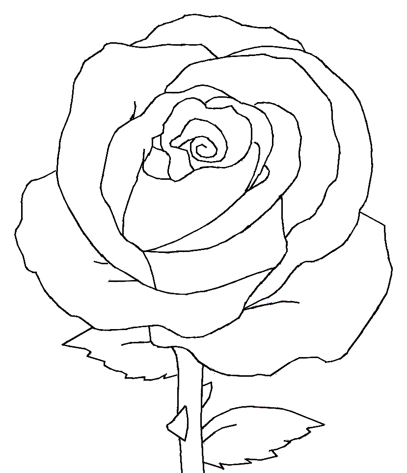 Line Drawing Of Rose Flower : Rose line art cliparts