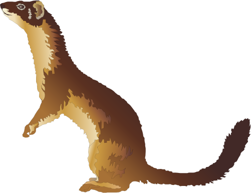 weasel clip art clipart best cliparts co ferret clip art cnc ferret clip art images black and white