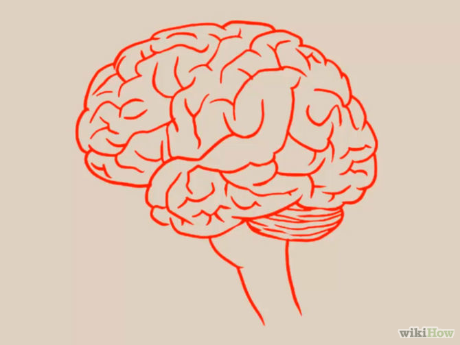 3 Ways To Draw A Brain - WikiHow - Cliparts co