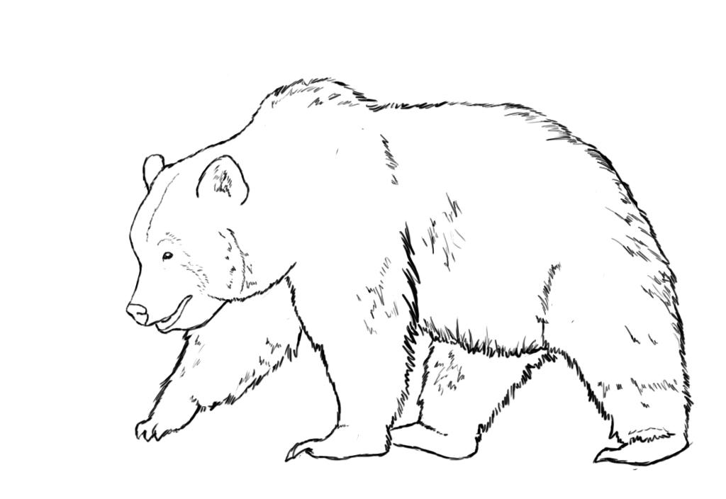 Bear Illustrations and Clipart 92041 Bear royalty free