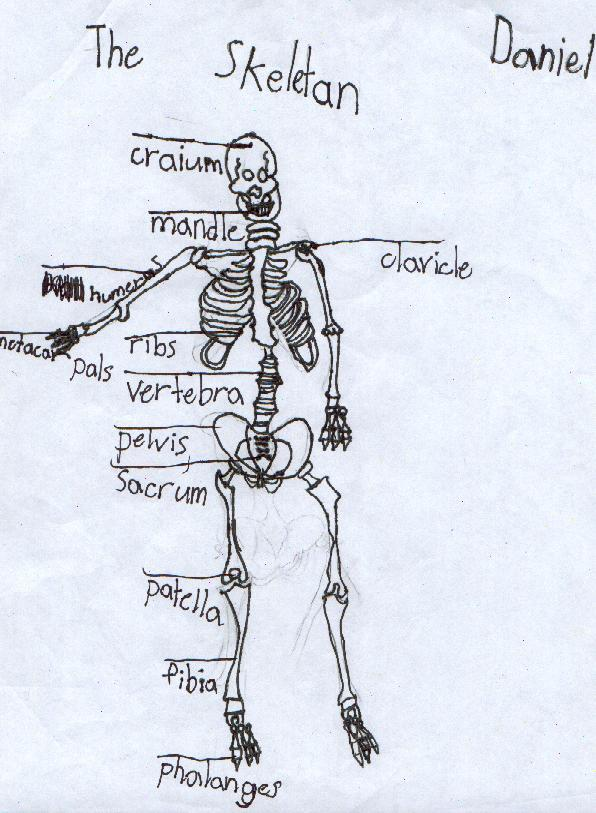 Kids Skeleton Drawing - Cliparts.co