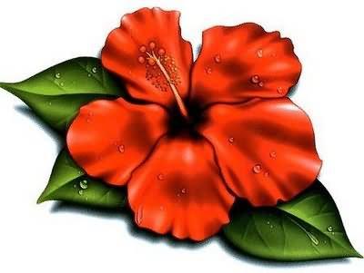 Cartoon Hibiscus Flower Clipartsco