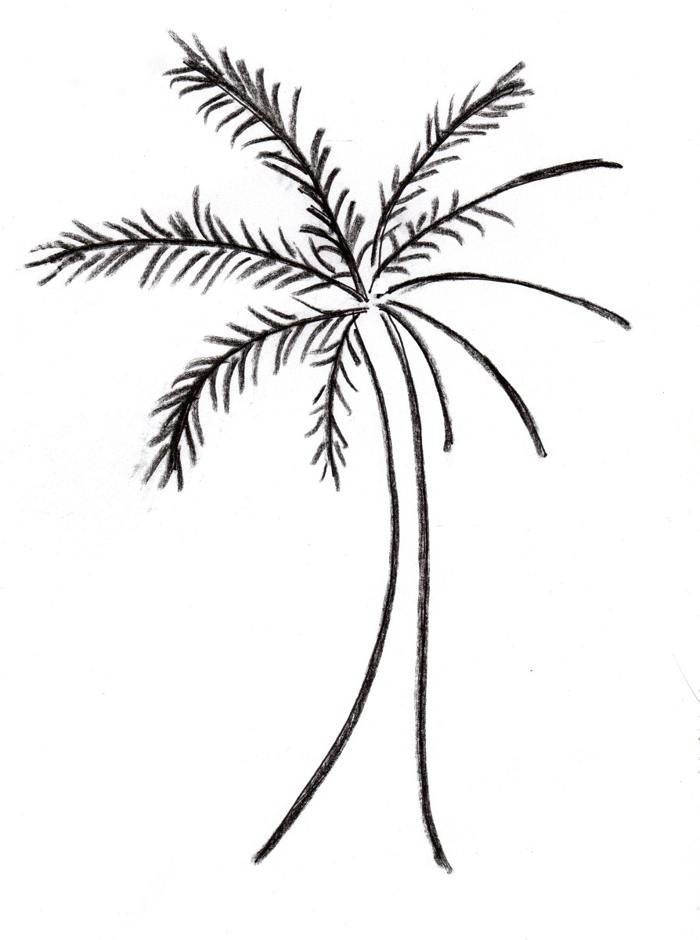 Palm tree pictures clip art | Free Reference Images