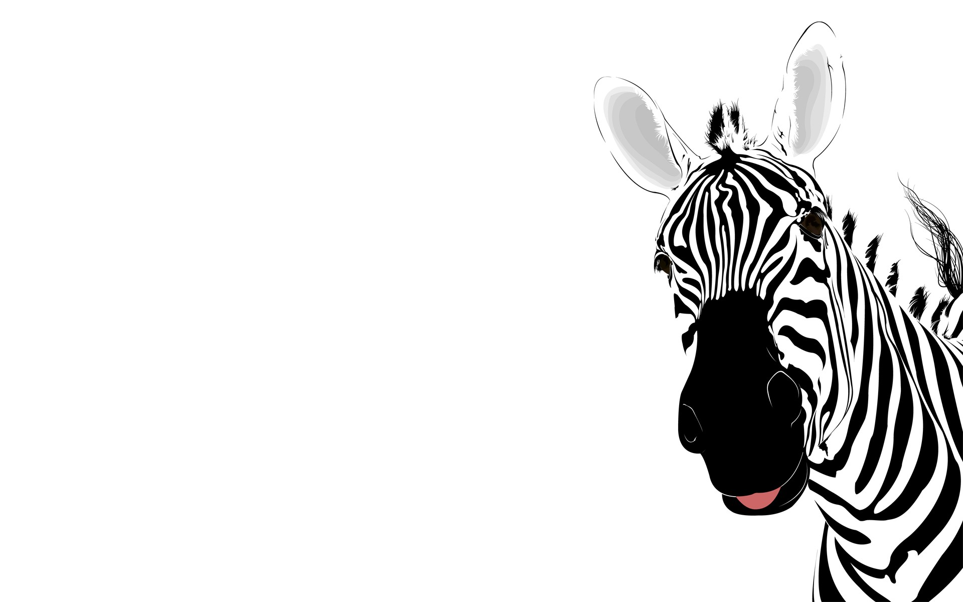 Cute Zebra Pictures