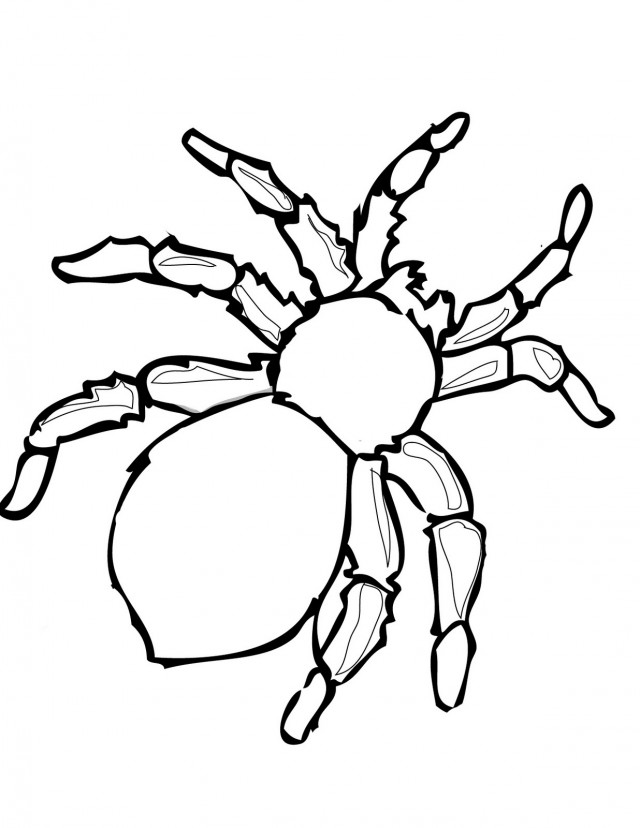 Spider Web Images Free Cliparts Co