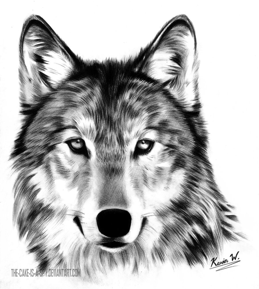 Wolf Drawing - Cliparts.co