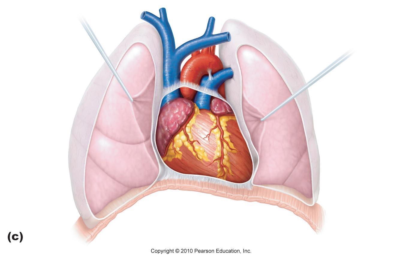 Unlabeled Diagram Of The Heart - Ekerekizul