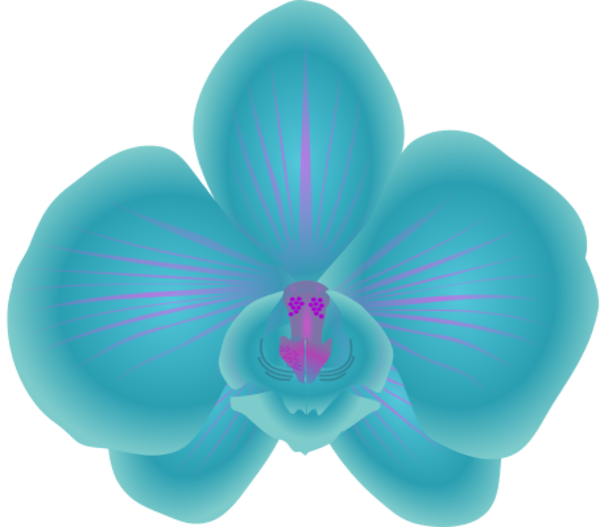 Orchid Clipart - Cliparts.co