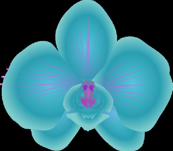Clip Art Orchid Clip Art blue orchid clipart 1
