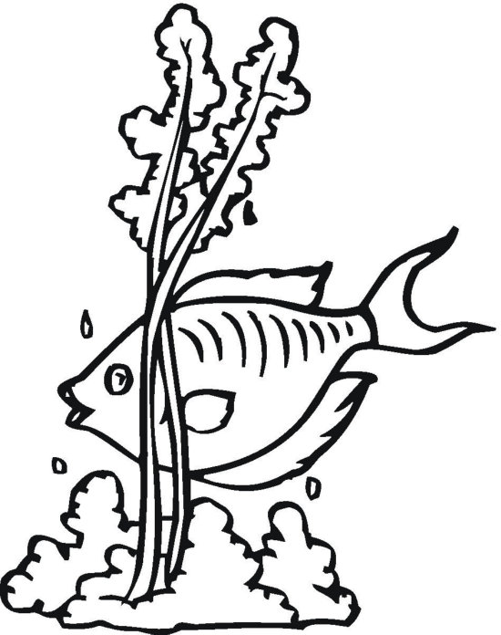 Seaweed Coloring Pages - ClipArt Best