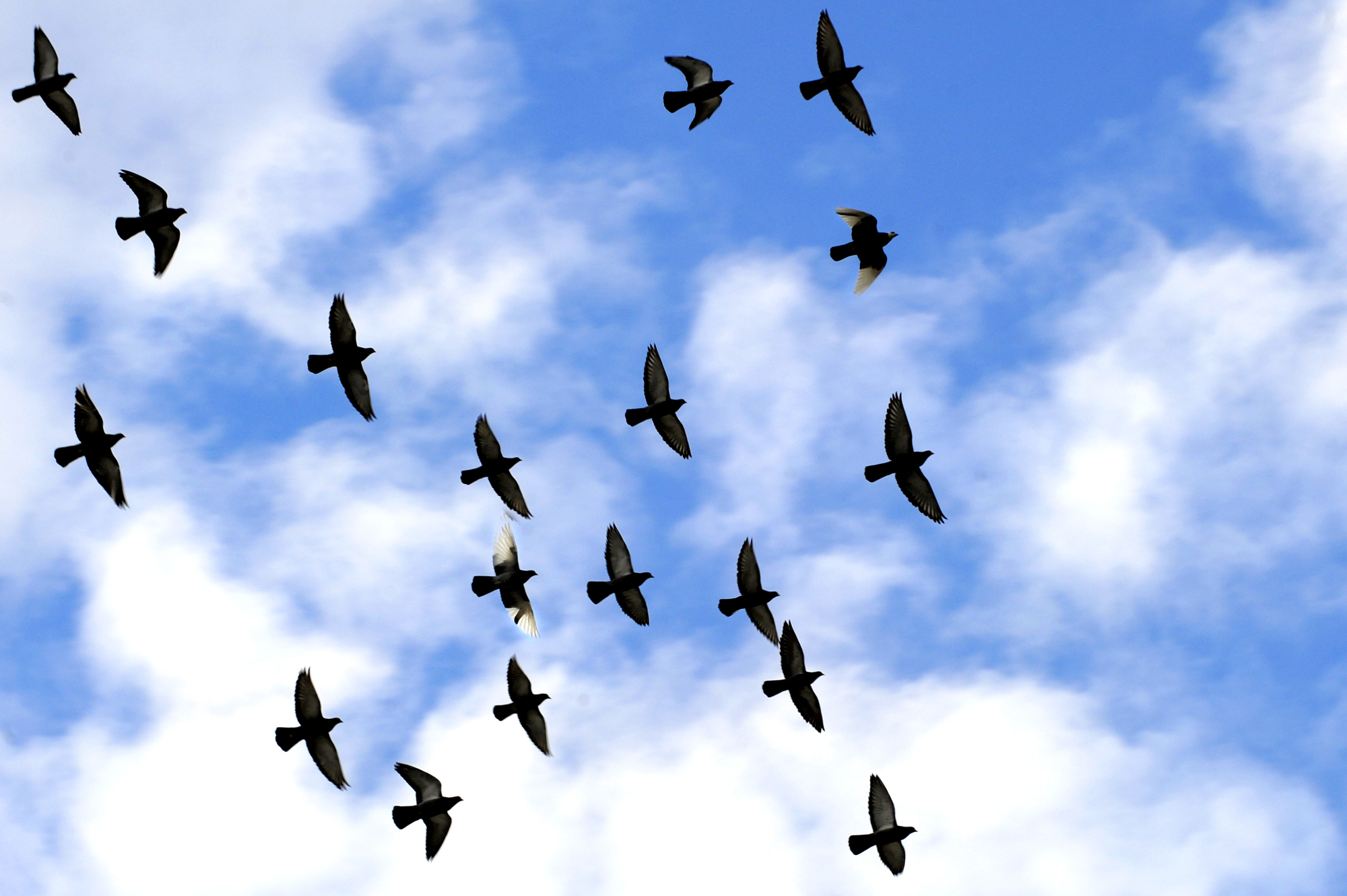 animated birds flying in the sky