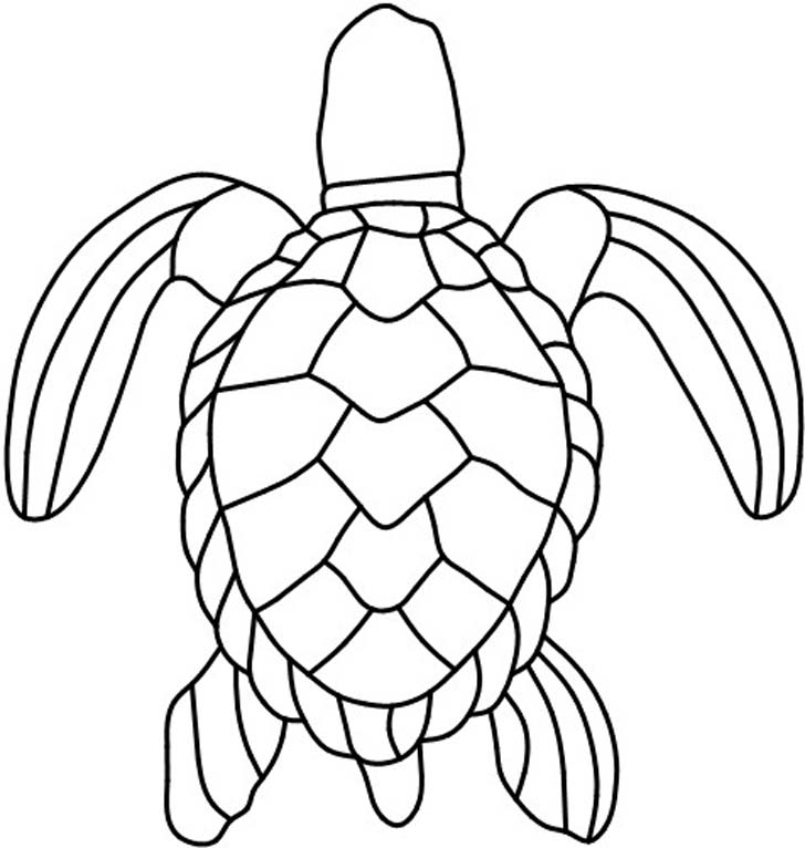 Turtle Shell Patterns