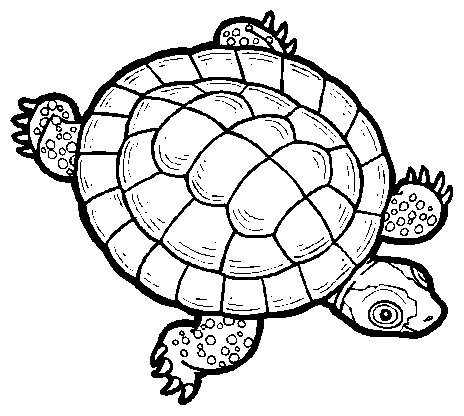 snapping turtle coloring page - turtle shell clip art
