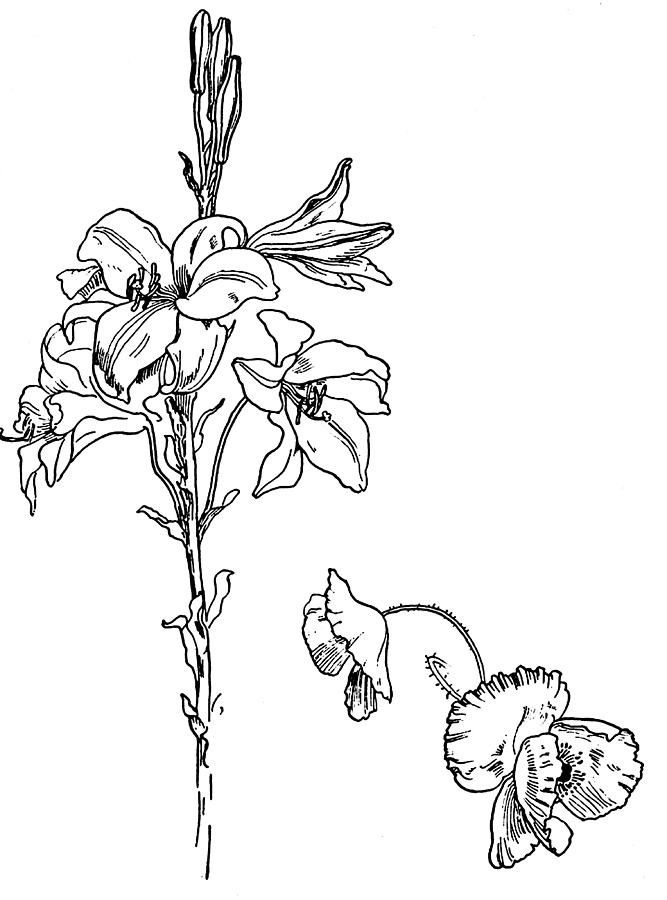 Flower In Line Drawing : Flowers line drawing cliparts