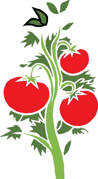 Tomato Plant Clip Art - Cliparts.co