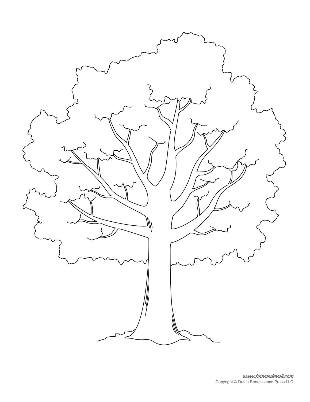Trees at EnchantedLearningcom