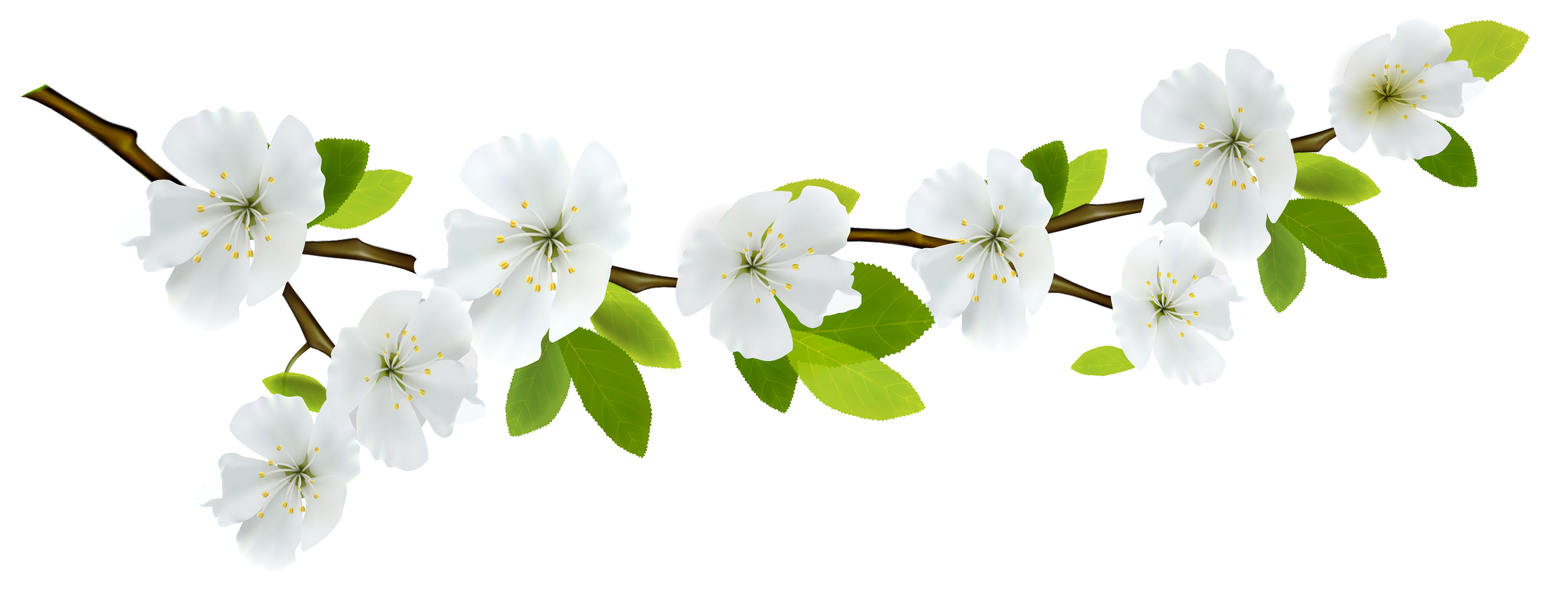 Spring Branch White PNG Clipart - Cliparts.co