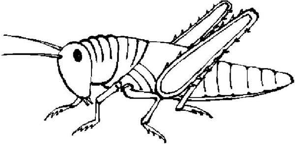Grasshopper Clipart Cliparts Co Locust Coloring Page