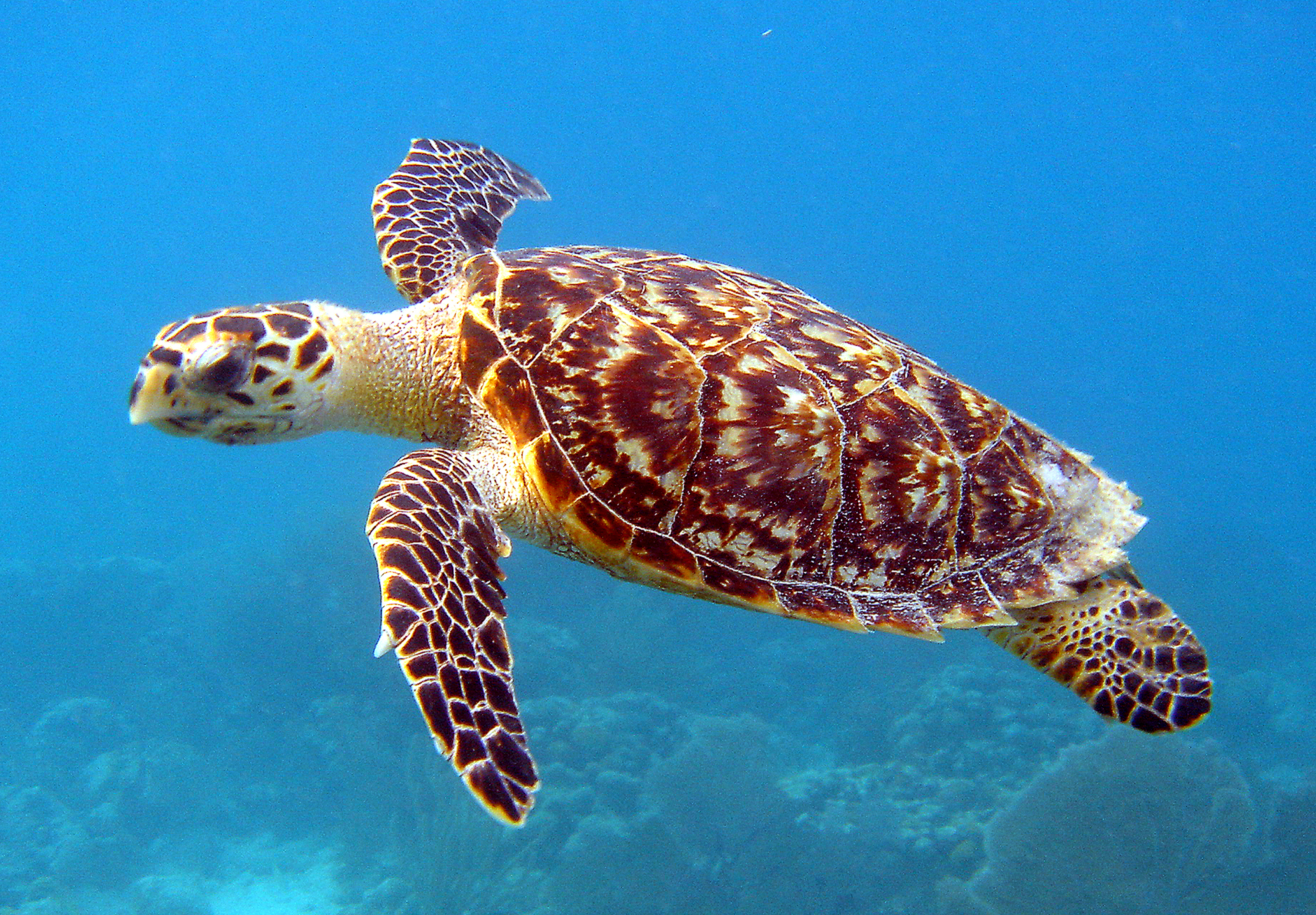 Save Turtles from Extinction | ForceChange