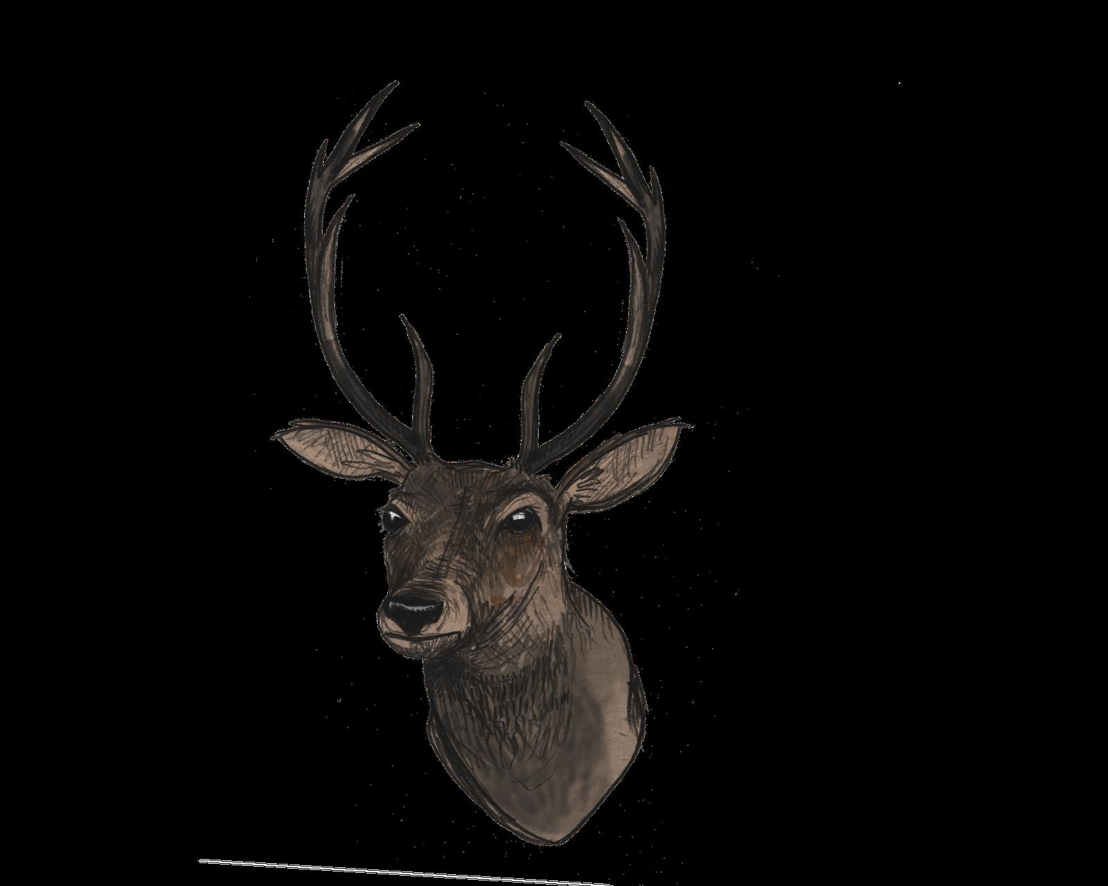 Deer Illustrations - Cliparts.co