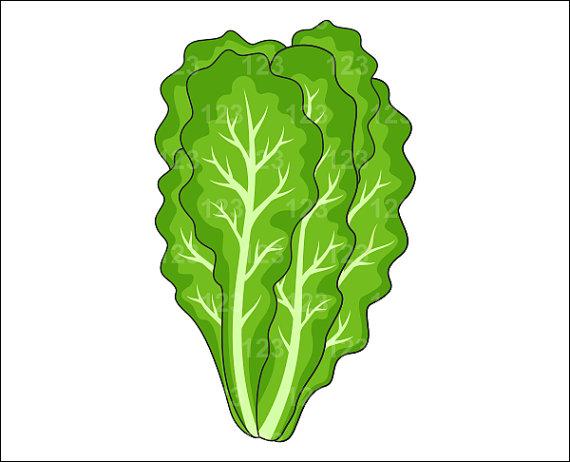 lettuce plant clipart rh worldartsme com romaine lettuce clip art lettuce images clipart