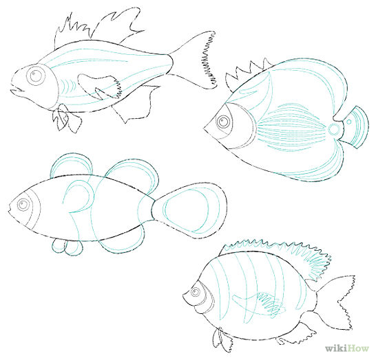 How To Draw Fish - Cliparts.co