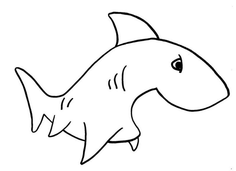 Shark Photo Prop  Oriental Trading