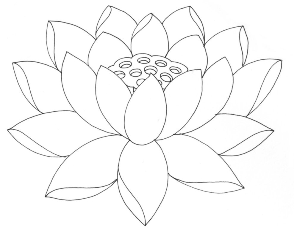 Lotus Outline