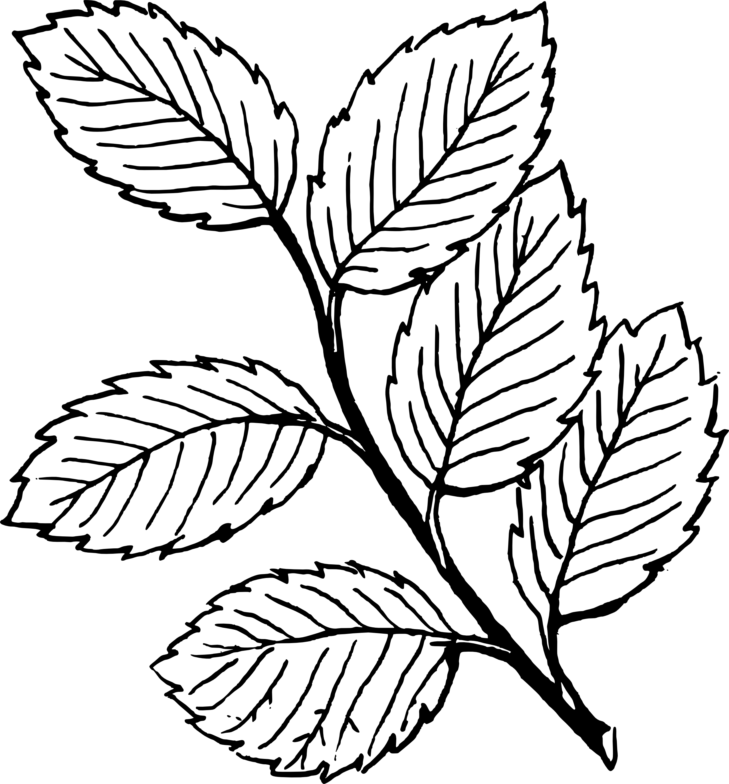 Fall Leaves Clip Art Black And White - Cliparts.co