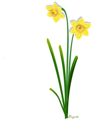 Daffodils Clipart - Cliparts.co