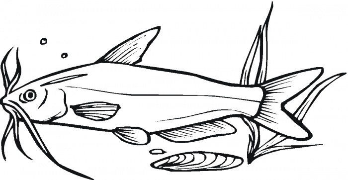 Drawings Of Catfish - ClipArt Best