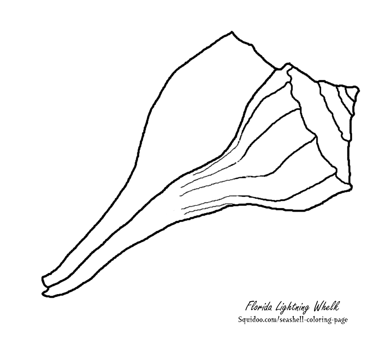Scribbles Drawing And Coloring Book : Conch shell outline cliparts