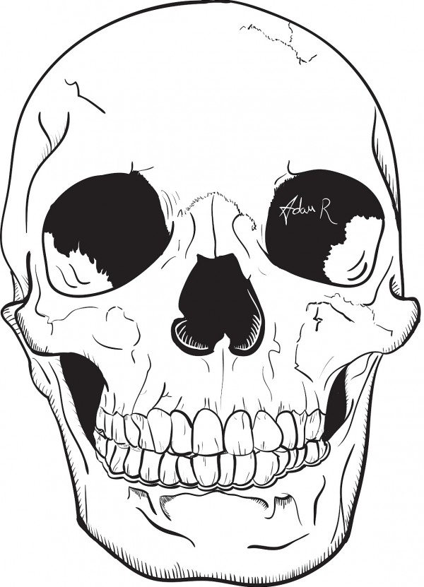 Illustrated Skull Vector - Attacking Pixels