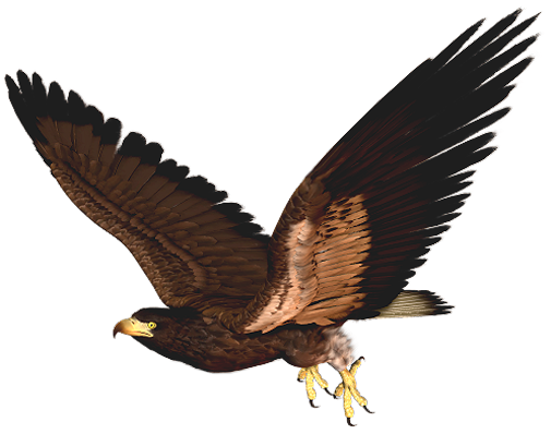 eagle bird clip art - photo #42