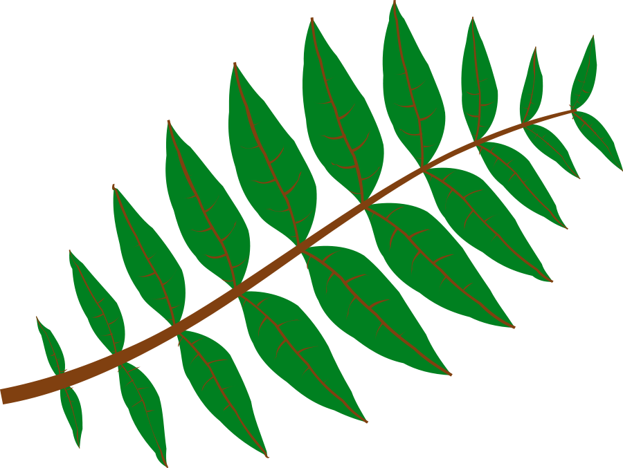 Pinnate Leaf Clipart, vector clip art online, royalty free design ...: cliparts.co/pictures-leaf