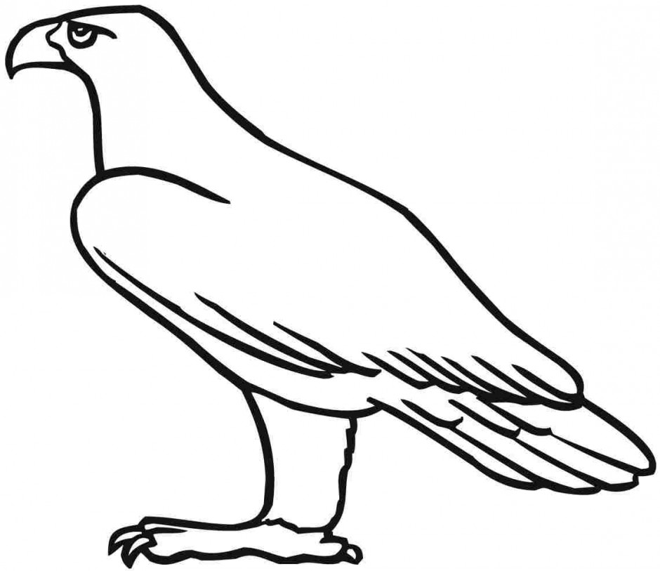 mighty eagle coloring pages - photo#33