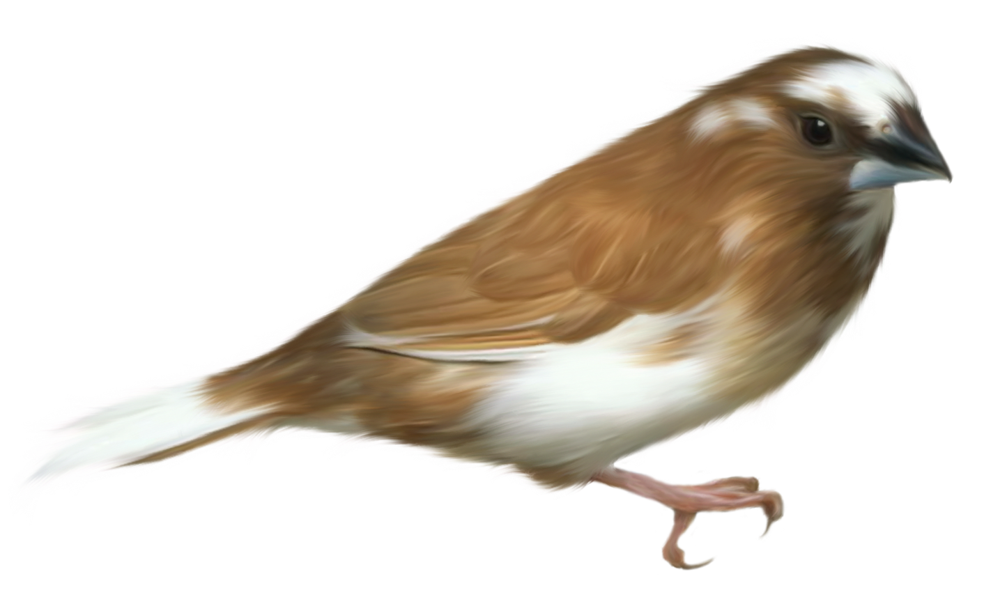 Bird Png  Cliparts.co