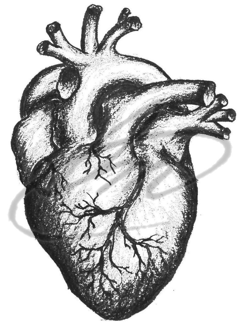 Real Heart Sketch - Cliparts.co