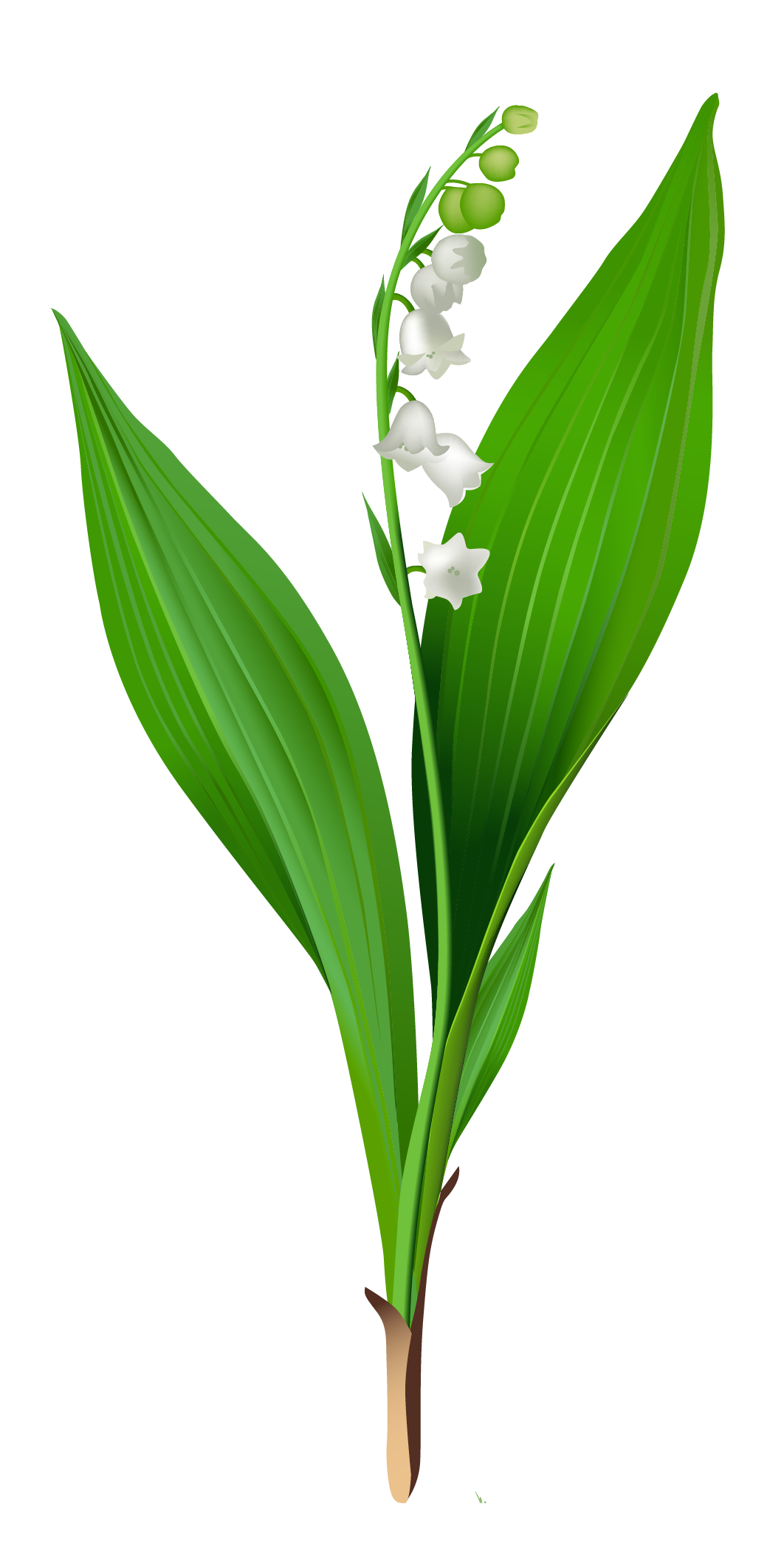 lily of the valley clip art. Black Bedroom Furniture Sets. Home Design Ideas