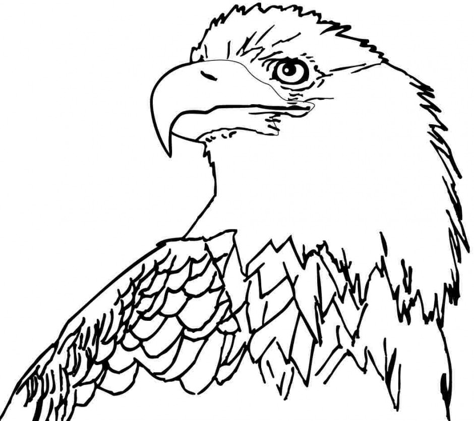 Bald Eagle Coloring Vector Of A Cartoon Bald Eagle Holding A Medal ...