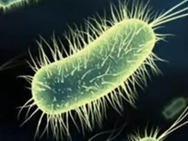 microbio importance