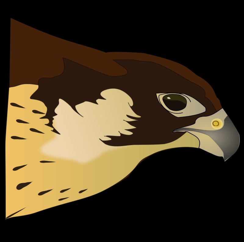 Hawk Clip Art Free - Cliparts.co