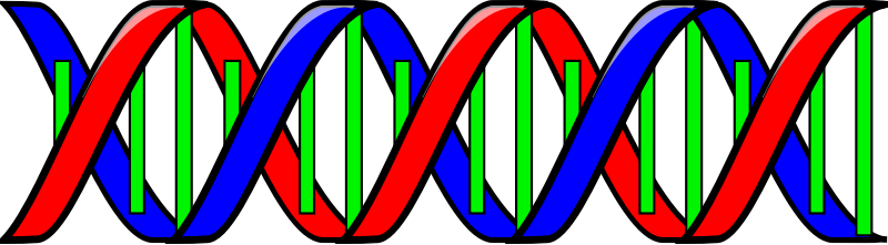 Clipart - Double Helix (DNA)