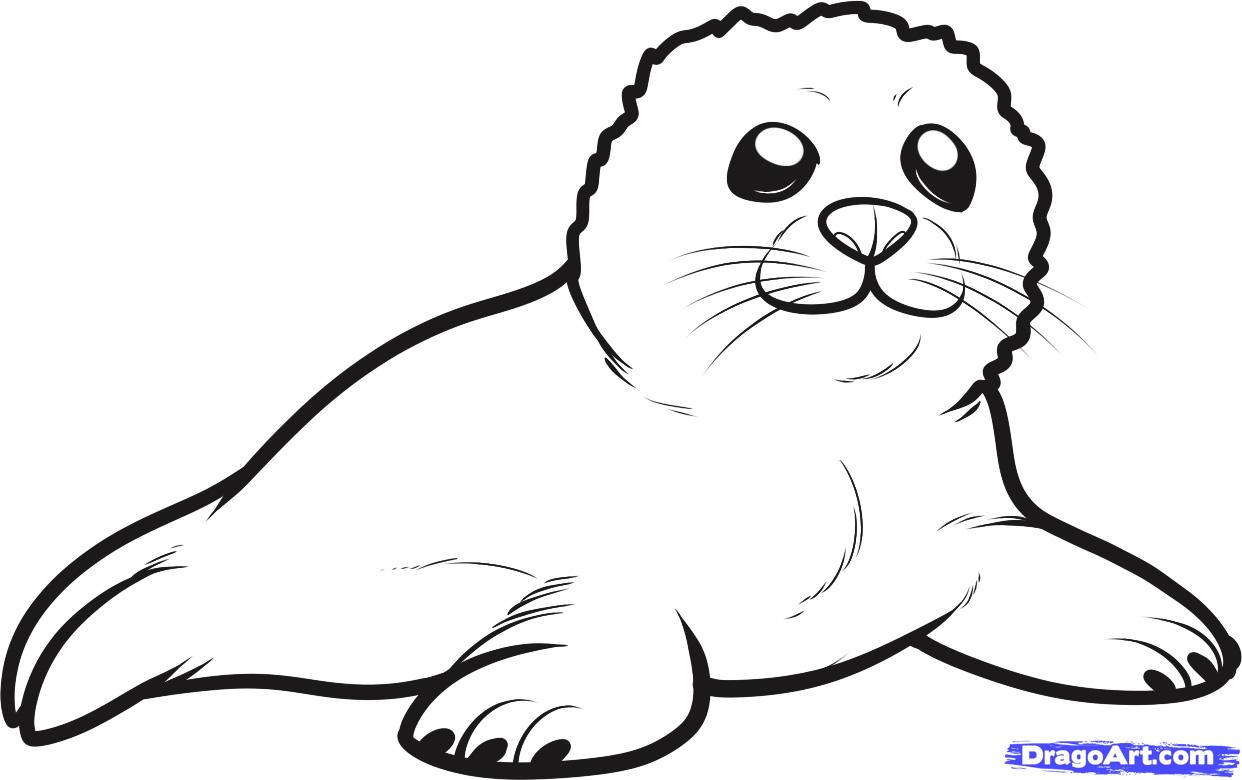 Coloring Pages Sea Lion Coloring Page sea lion coloring pages eassume com california page