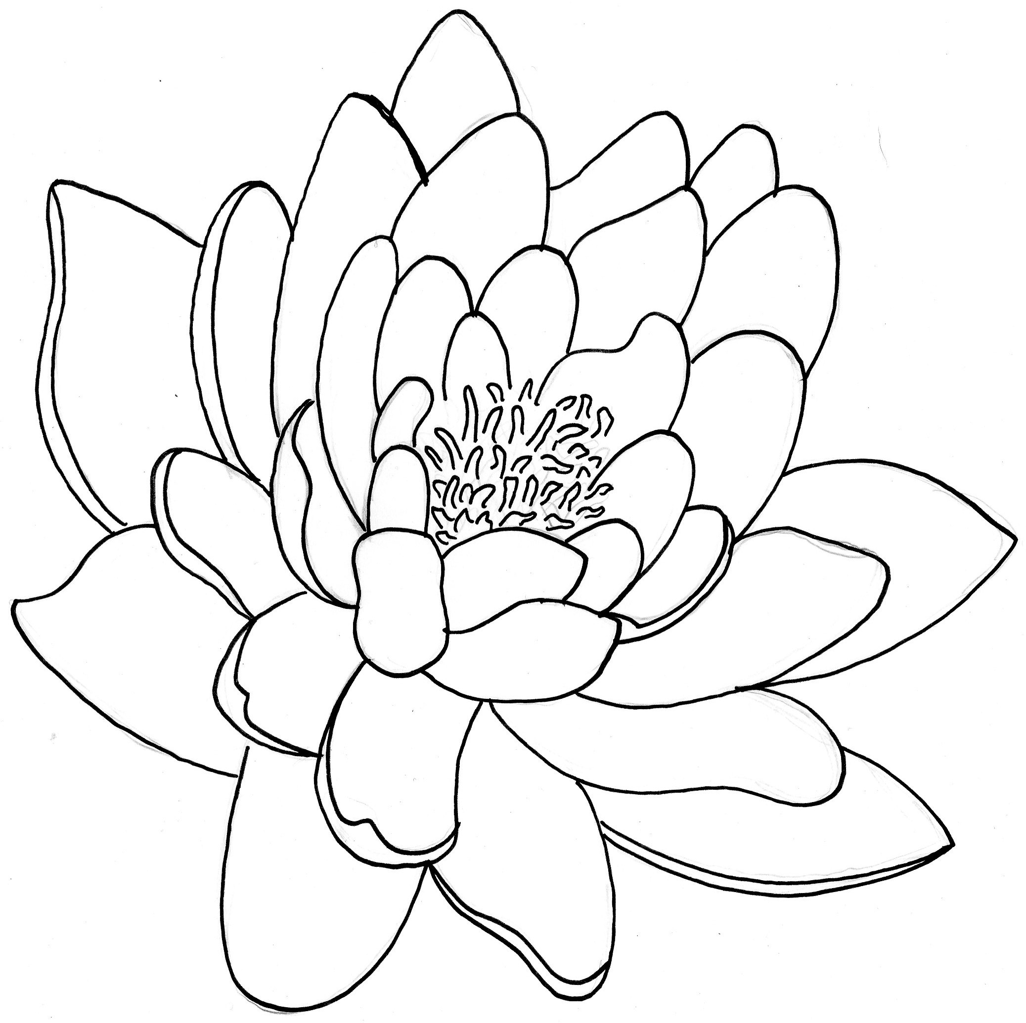 Lotus Flower Line Drawing Vector Free Download : Lotus flower line drawing vector free download