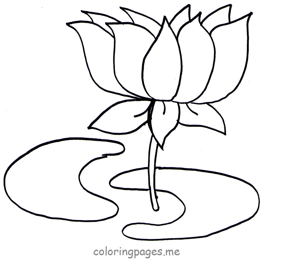 Lotus Flower Drawing Outline - Flowers Picture