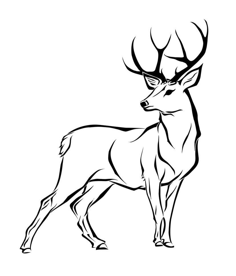 Line Art Deer : Deer line art cliparts