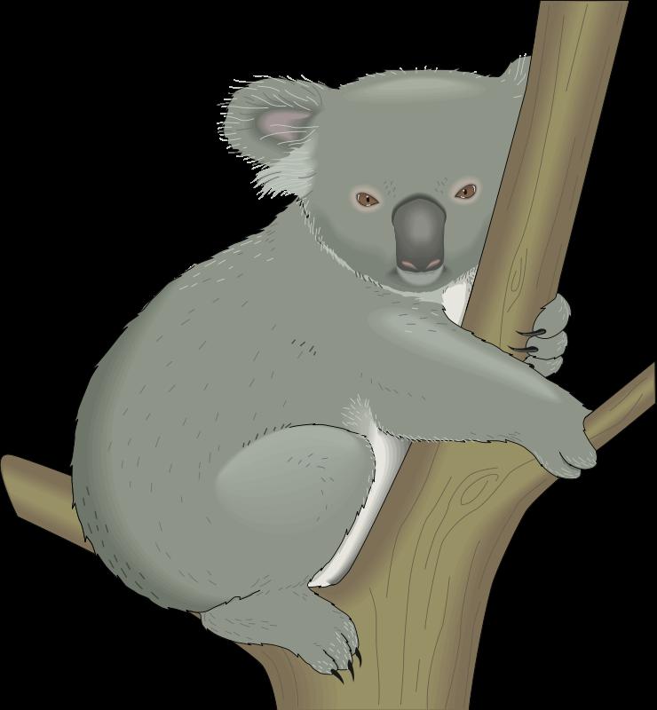 Clip On Koala Bear - Cliparts.co
