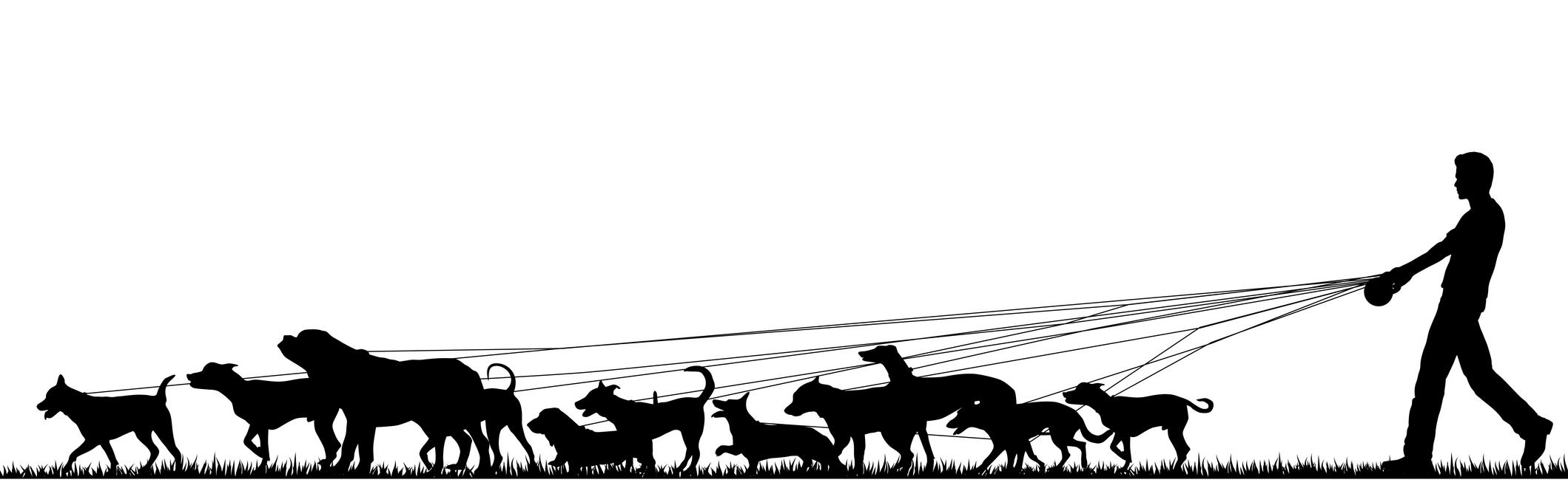 dog walker in sandton