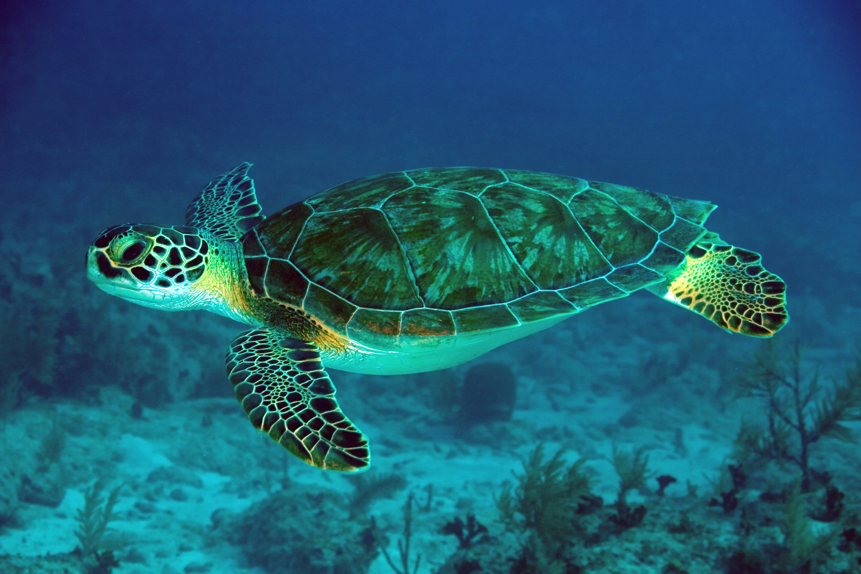 Conservationists Thrilled About New Record in Green Sea Turtle ...